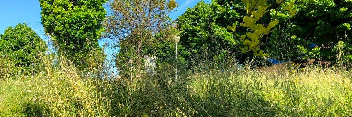 La gestione delle giungle urbane