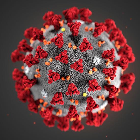 Con il buonsenso batteremo il Coronavirus